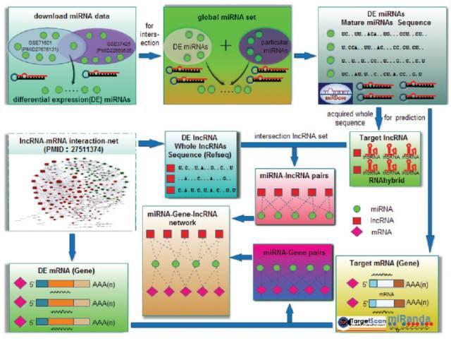 不做实验SCI论文发发发系列之——ceRNA网络-sci666