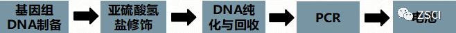 通过MSP法做甲基化检测