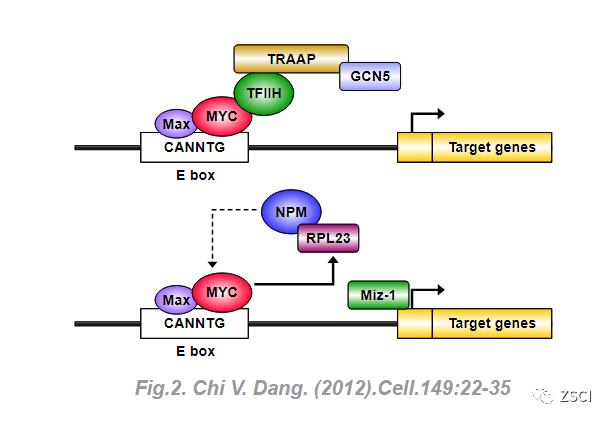利用Illustrator for BiologicalSequences(IBS)画基因及蛋白序列图方法教程-sci666