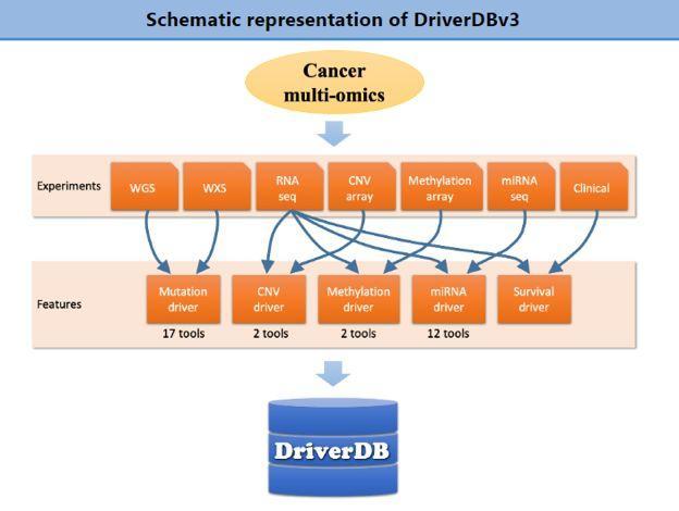 DriverDBv3:一站式解决肿瘤多组学分析-sci666