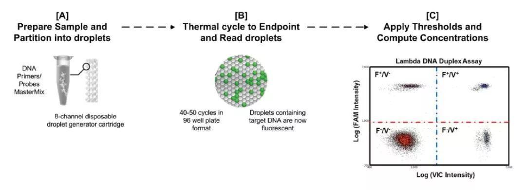 Digital PCR(数字 PCR)的优势与应用-sci666