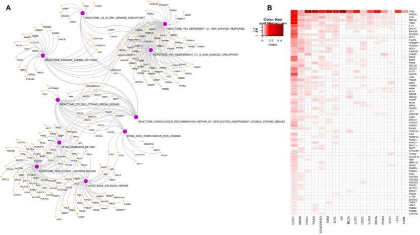 文献解读:泛癌DNA损伤-sci666