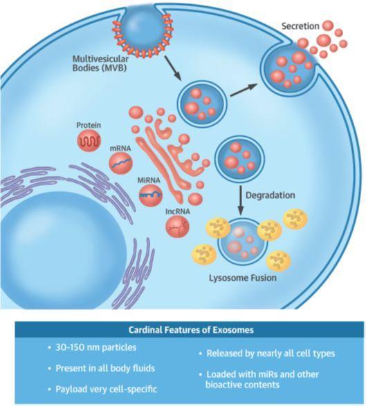 外泌体(exosome)文献综述一览-sci666