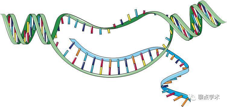 怎样判断提取的RNA质量好坏?-sci666