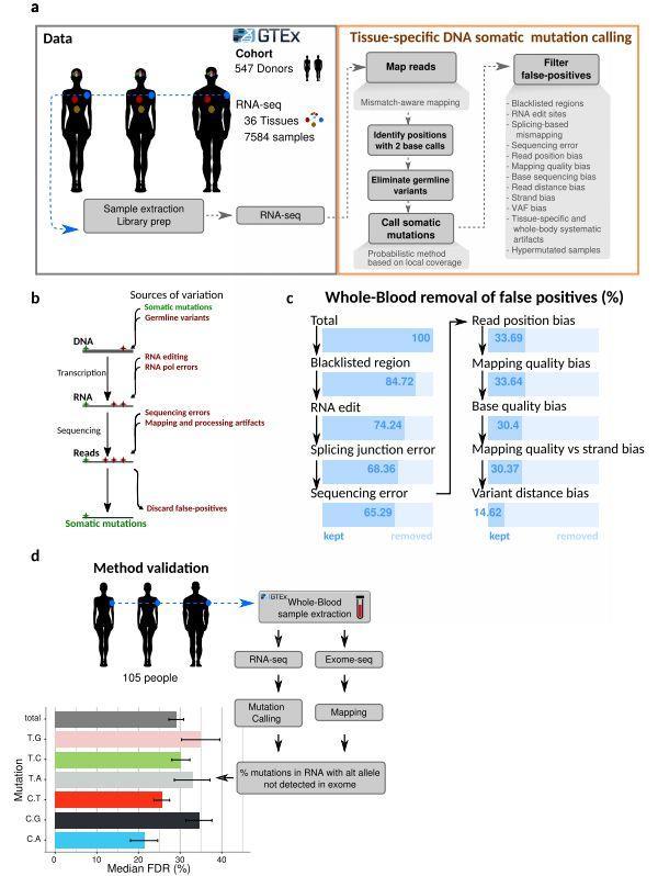 文献解读:36个非癌组织体细胞突变-sci666