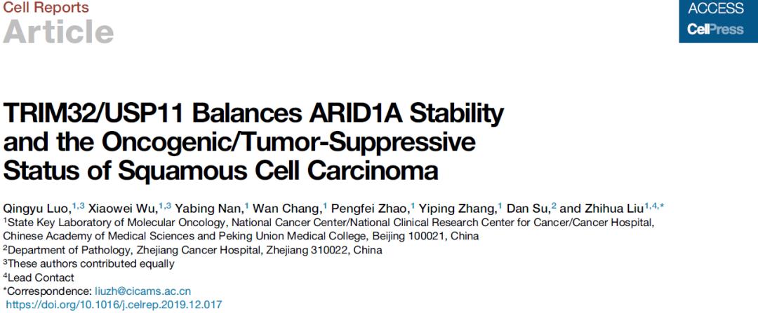 刘芝华团队揭示泛素化与去泛素化过程在鳞状细胞癌发生发展中的关键作用-sci666