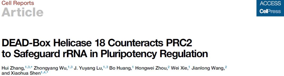 沈晓骅团队揭示rDNA表观状态建立机制及其对多能性的调控-sci666