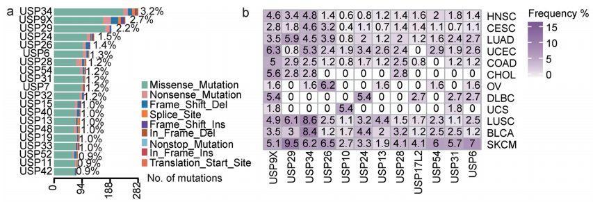 文献解读:基因家族泛癌分析