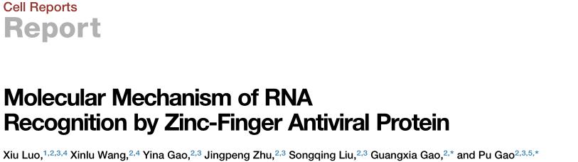 高璞/高光侠合作揭示锌指抗病毒蛋白ZAP识别RNA的分子机制-sci666