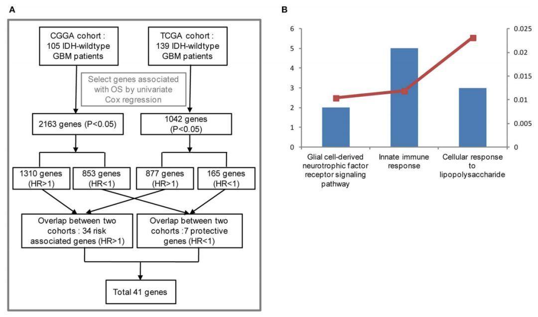 文献解读:胶质母细胞瘤IDH突变患者预后-sci666
