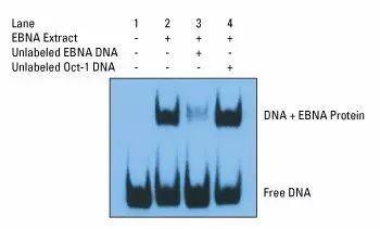 梳理总结DNA与蛋白质互作研究的技术-sci666