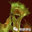 细胞如何养好、避免污染,污染了该如何抢救?-sci666