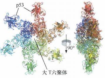 《癌生物学》第九章(1) p53——抑癌基因-sci666