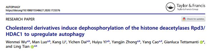 田铃研究团队发现胆固醇及其衍生物调控细胞自噬发生的新机制