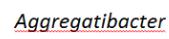 物种拉丁名WORD中报错怎么办