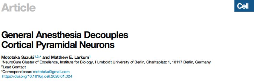 全麻如何选择性影响皮层椎体神经元? 