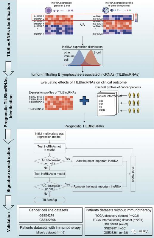 文献解读:免疫细胞特有marker肿瘤分析思路
