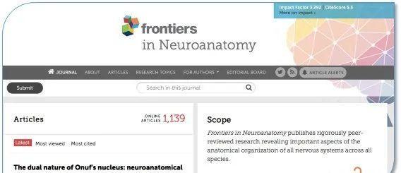 frontiers in neuroanatomy文章投稿图片要求 需要高分辨率的Figures