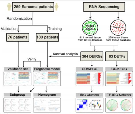 软组织肉瘤免疫相关基因综合生信分析文章思路