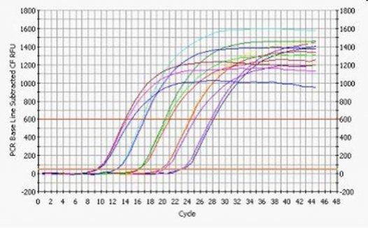 基本概念RNA是什么?cDNA是什么?内参是什么? real time PCR 是什么?