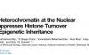 破解异染色质细胞核周定位之谜