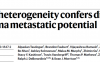 Nature:乳酸通过MCT1促进黑色素瘤转移