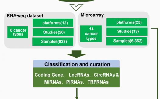 BBcancer数据库:早期肿瘤检查标志物筛选工具