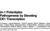 Ataxin-1缺失导致阿尔茨海默病发生的机制