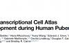 郭靖涛等描绘了首幅人类性成熟时期睾丸细胞的单细胞表达图谱