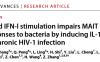 南科大张政团队揭示HIV慢性感染MAIT细胞功能损伤新机制
