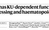 查珊等揭示DNA修复蛋白DNA-PK复合体在核糖体RNA加工及造血中的新功能