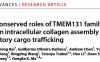 马登科团队发现负责胶原蛋白组装及分泌运输的新蛋白