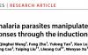 徐文岳团队揭示疟原虫免疫逃避新机制