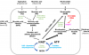 李小玲组揭示微生物通过代谢旁路促进哺乳动物的NAD合成