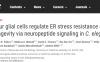 神经胶质细胞调节内质网应激抵抗和长寿