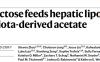 果糖摄入通过肠道菌群影响肝脏脂肪生成