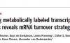 单细胞转录代谢标记揭示mRNA降解策略