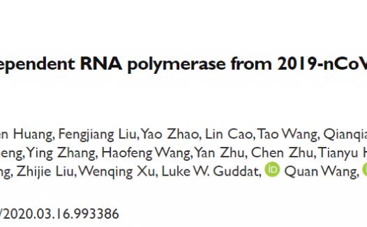 饶子和团队解析新冠病毒RNA依赖RNA聚合酶(瑞德西韦靶点)高分辨率结构