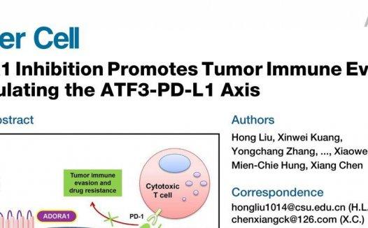 陈翔/刘洪合作揭示腺苷调控肿瘤PD-L1新机制