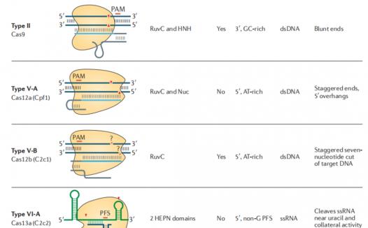 重新定义CRISPR-Cas系统功能 IV型CRISPR-Cas可用于对抗耐药菌