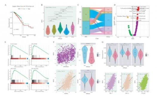 文献解读:乳腺癌免疫浸润预后标志物生信分析