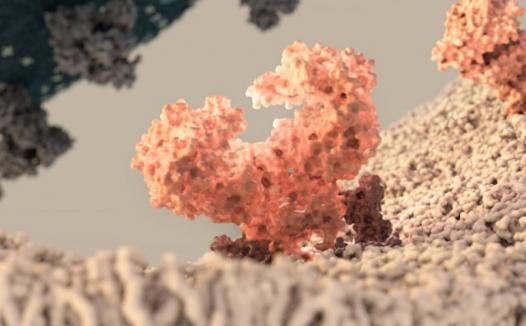 王新泉/张林琦、李放分别发表新冠病毒与人ACE2受体复合物结构