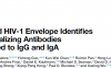 艾滋病毒表面膜蛋白分选出转换成IgG和IgA的广谱中和抗体