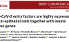 SARS-CoV-2可感染特定鼻细胞