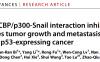 吴照球/陆涛团队发现首个直接靶向Snail的化合物