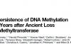 从头甲基转移酶丢失后酵母DNA甲基化仍可维持数百万年