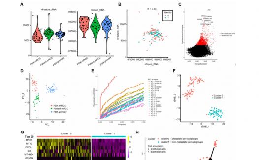 文献解读:单细胞测序验证肾透明细胞癌转移相关基因可作为预后标志物