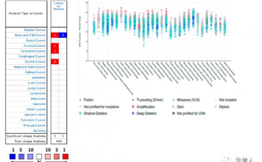 文献解读:CHEK1在实体瘤中的基因表达变化及分子分析(泛癌分析)