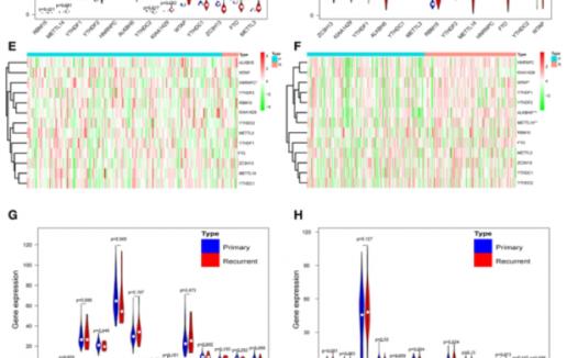 文献解读:m6A RNA甲基化4分文章思路