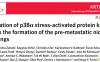 桂俊等揭示肺成纤维细胞中p38激酶活化促使肿瘤在肺部形成转移前微环境